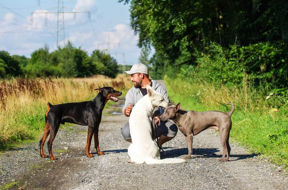 Hundebetreuung Under Dogs - Gassiservice - Haustierservice Oberhausen