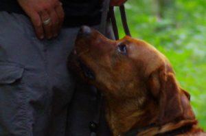 Under Dogs, Hundetraining Oberhausen, mobile Hundeschule, alternative Trainingsmethoden, Thai Ridgeback, Torben Kammilla, Hundebetreuung, Hundefotografie, Tierfotografie, Barf Beratung